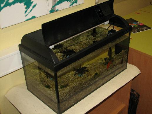 V knihovně se daří i rybičkám